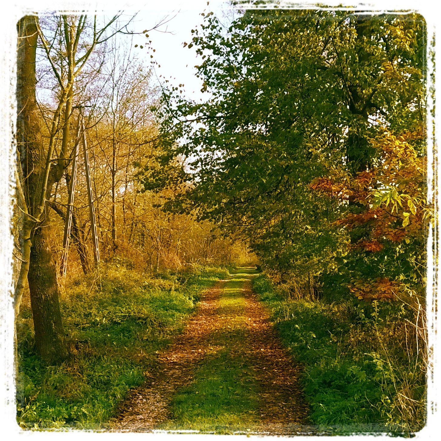 Czego możemy uczyć się od rytmów natury na ścieżce medytacyjnej?